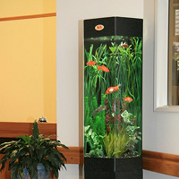 Live Environments Aquariums